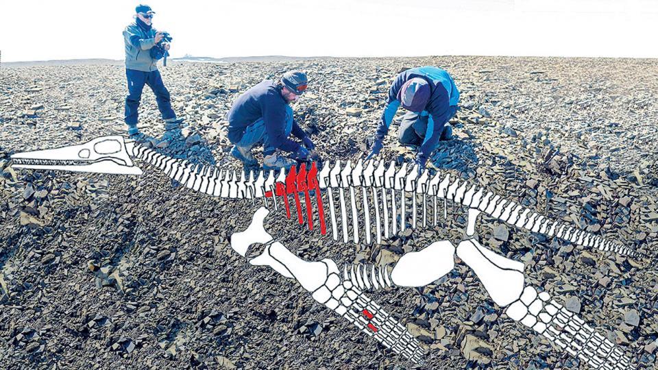 El plesiosaurio era carnívoro, de más de seis metros de largo, y estaba adaptado a la caza marina.