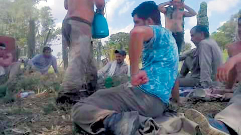 Los trabajadores santiagueños provenientes de Salavina en el campo bonaerense de Advanta.