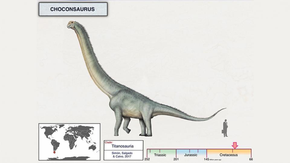 El Choconsaurus era herbívoro y alcanzaba una altura similar a la de un tercer piso.
