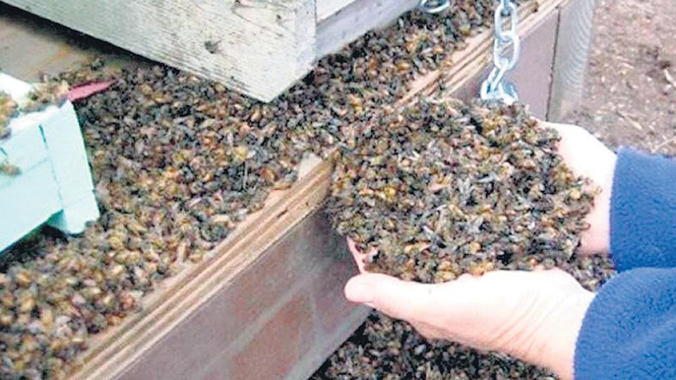 La mortandad de abejas ocurrió en Traslasierra, en marzo pasado.