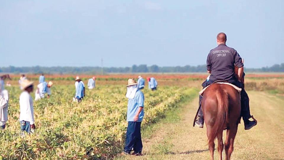 La cárcel Angola incluye trabajos forzados de los presos en plantaciones.