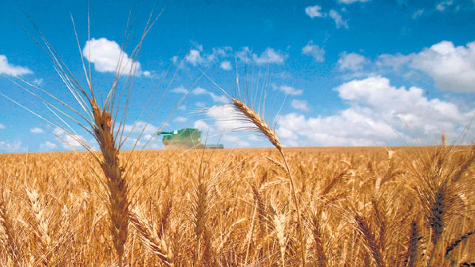Los productos agropecuarios subieron 31,9 por ciento en doce meses.