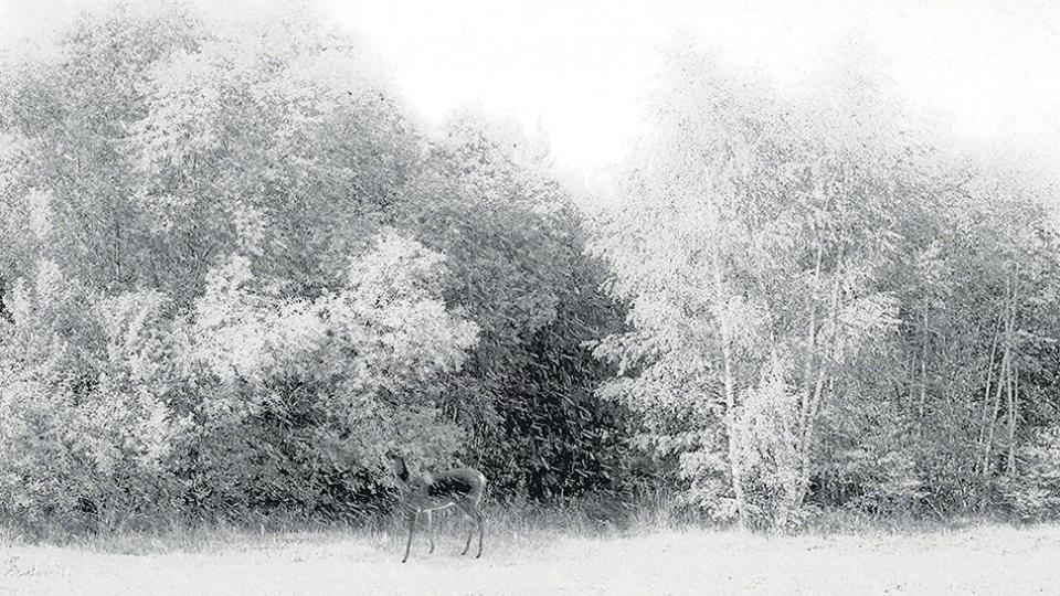 En busca de un instante de la realidad | 24 cuadros... | Página12