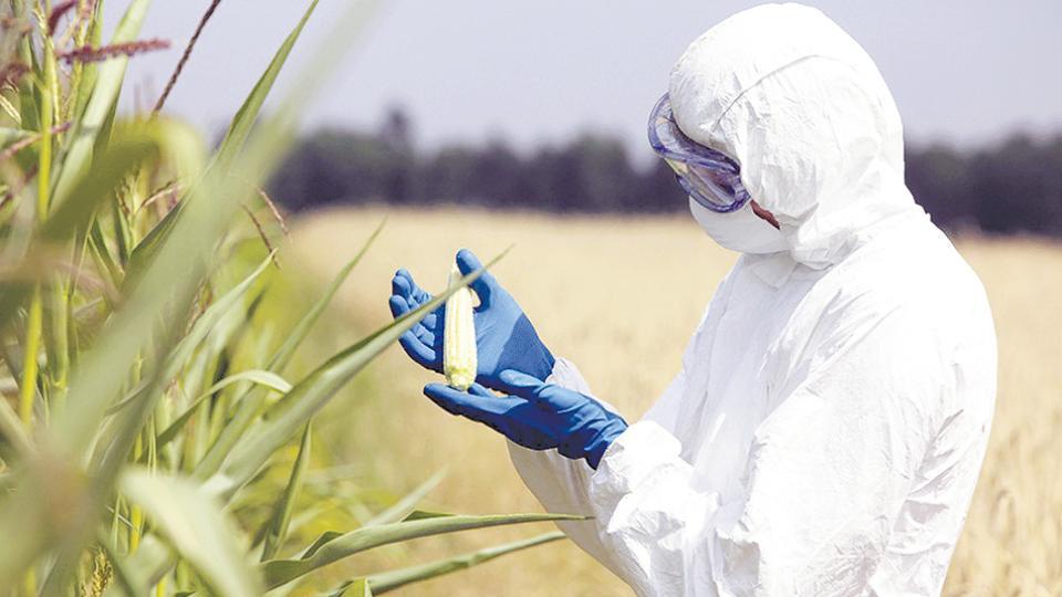 El informe apunta a cuatro empresas que dominan el mercado de semillas y agrotóxicos.
