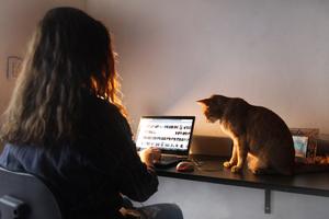 El 42 por ciento de los teletrabajadores manifestó estar trabajando más horas que cuando lo hacían en forma presencial. (Fuente: Leandro Teysseire)