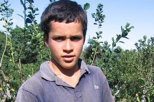 Taraferos, documental filmado en la región nordeste de la Argentina, da cuenta de las injusticias sociales que se consuman en la cosecha de la yerba mate.