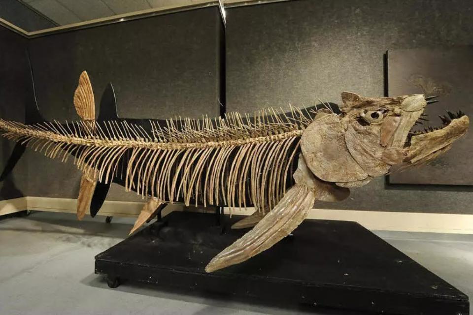Patagonia: hallaron el fósil de un pez gigante