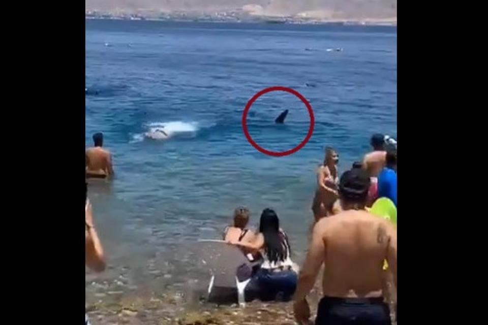 Israel: un tiburón ballena atemorizó a nadadores cerca de la orilla