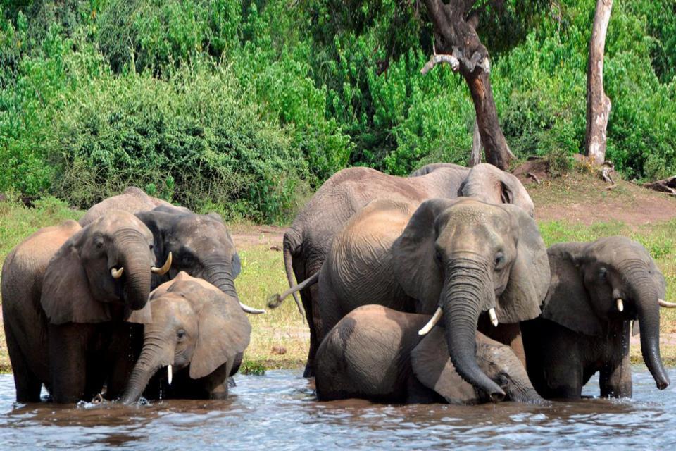 Misterio por la muerte de más de 350 elefantes en Botsuana