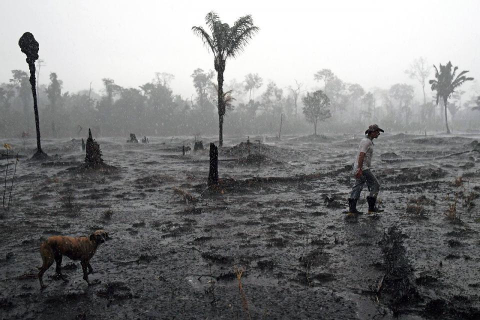Deforestación récord en la Amazonia brasileña en el primer semestre de 2020