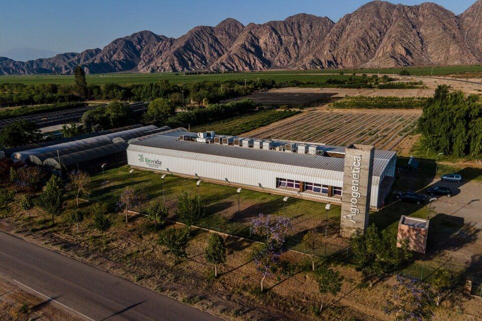 Catamarca se suma al desarrollo de La Rioja para el cultivo de Cannabis