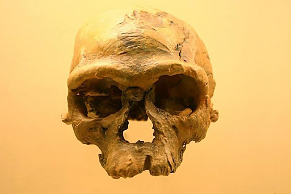 El cráneo del homo sapiens hallado en Marruecos.