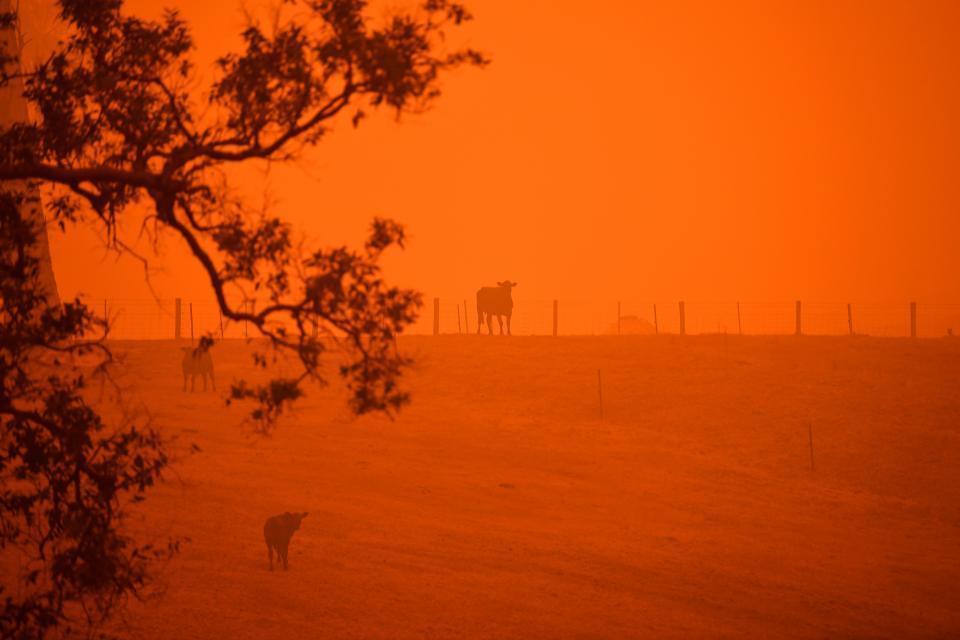 Incendios en Australia: son 29 los muertos