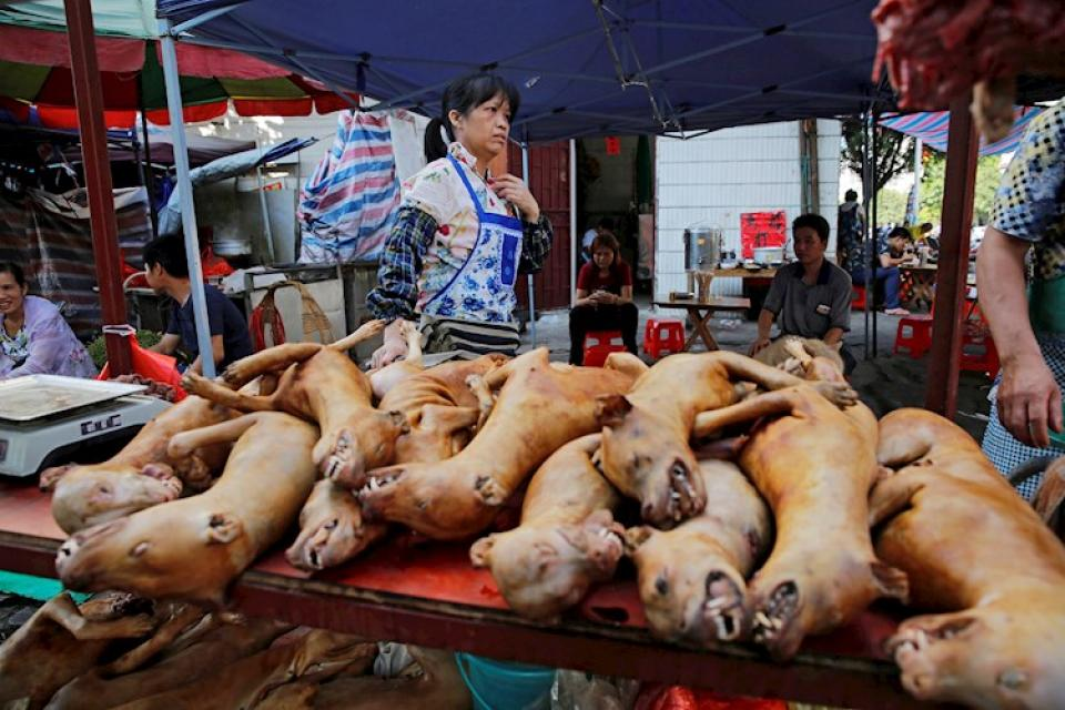 Por el coronavirus, una ciudad china prohibió el consumo de gatos y perros