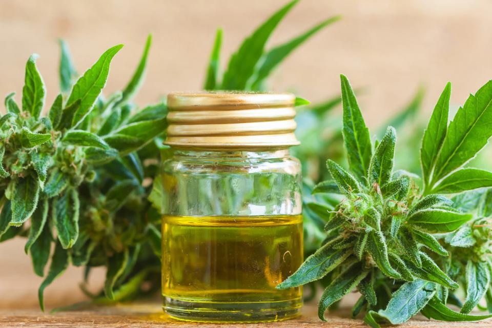 Cannabis medicinal directamente en las farmacias | ... | Página12