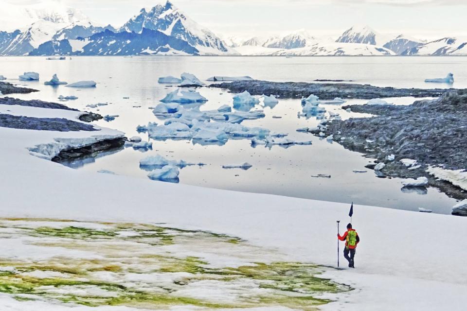 """La """"nieve verde"""": algas en la Antártida por el cambio climático"""