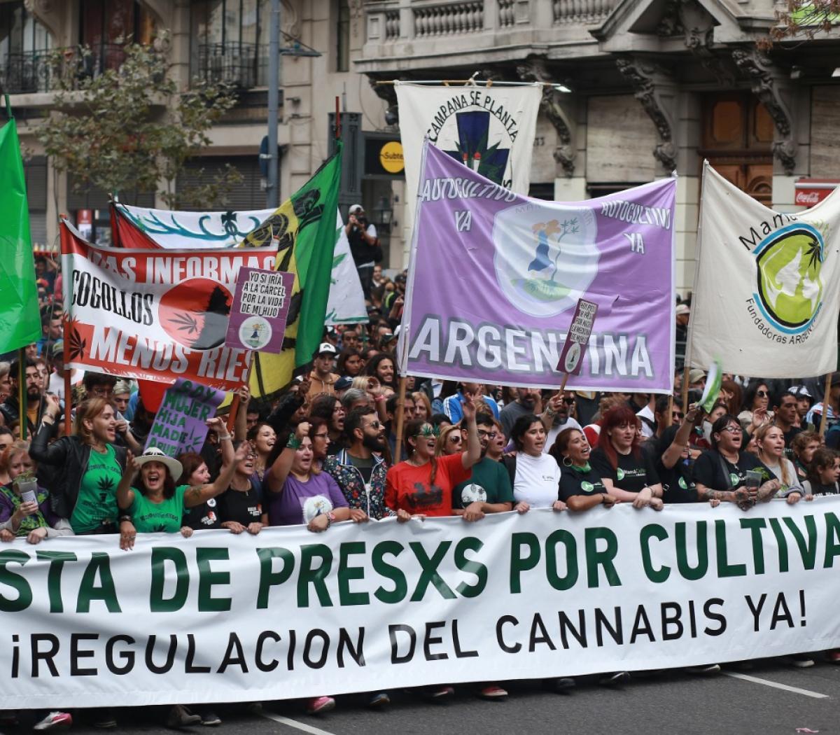 Cannabis medicinal: el Gobierno prevé autorizar el ...   Página12
