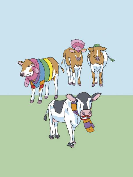 ¡llegaron las vacas de invierno!